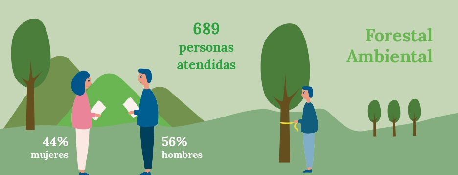 Diseño ilustraciones para infografías con datos sobre forestal ambiental de la Memoria de Actividades de FUNDAP